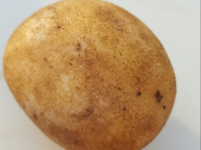 Potato Scab on Potato