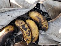Anthracnose of Banana - Banana
